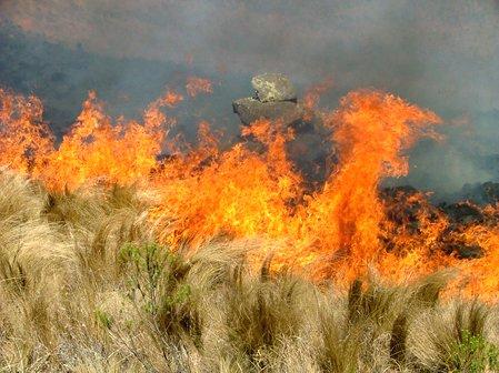 incendios-pastizales